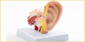 أعراض التهاب عصب الأذن